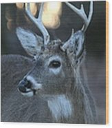 8 Point Buck With Sunset Wood Print