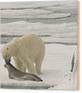 Polar Bear With Fresh Kill Wood Print