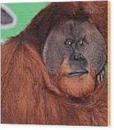 Portrait Of A Large Male Orangutan Wood Print