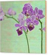 Purple Orchid-11 Wood Print