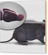 Rat Brain Anatomy Wood Print
