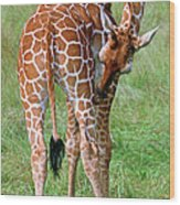 Reticulated Giraffe Wood Print