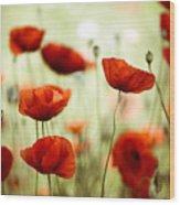 Summer Poppy 8 Wood Print