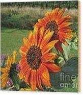 Sunflower From The Color Fashion Mix Wood Print