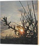 Sunshine On Raven Beach Wood Print