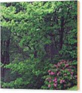 Usa, North Carolina, Pisgah National Wood Print