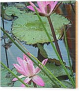 Pink Water Lily Pond Wood Print