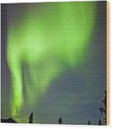 Yukon Taiga Spruce Northern Lights Aurora Borealis Wood Print