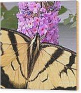 #859 D480 Swallowtail 2010.jpg Wood Print