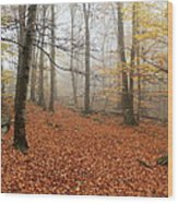 In The Autumn Forest Wood Print