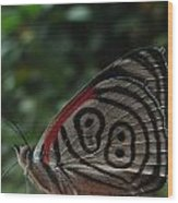 88 Butterfly Wood Print