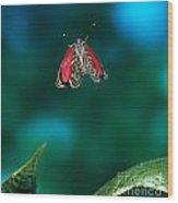 89 Butterfly In Flight Wood Print by Stephen Dalton