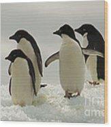 Adelie Penguins Wood Print