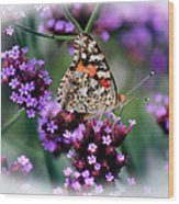 American Painted Lady Butterfly Wood Print