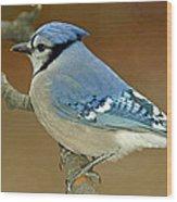 Blue Jay Animal Portrait Wood Print