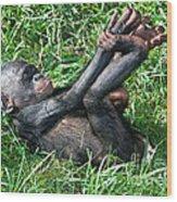Bonobo Baby Wood Print