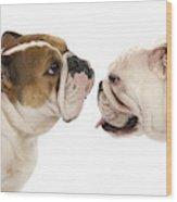 Bulldog Anglais Wood Print