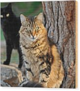 Cats In Hydra Island Wood Print