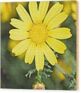 Daisy Wood Print by George Atsametakis
