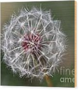Dandelion Seed Head Wood Print