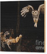 Eastern Screech Owl Wood Print