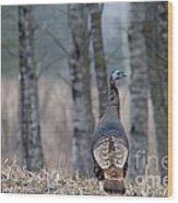Eastern Wild Turkey Wood Print by Linda Freshwaters Arndt