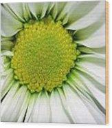 Flower Closeup Wood Print