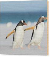 Gentoo Penguin (pygoscelis Papua Wood Print