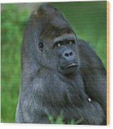 Gorille De Plaine Gorilla Gorilla Wood Print