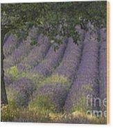 Lavender Field, France Wood Print