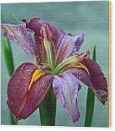 Louisiana Iris Wood Print