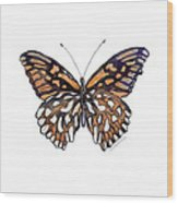 9 Mexican Silver Spot Butterfly Wood Print
