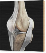 Right Knee Ligaments Wood Print