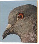 Rock Dove Wood Print