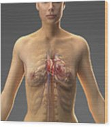 The Cardiovascular System Female Wood Print