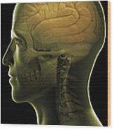 The Human Brain Wood Print