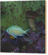 Tropical Fish And Coral Wood Print