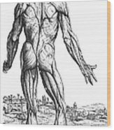 Vesalius: Muscles, 1543 Wood Print