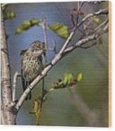 Yellowrumped Warbler Wood Print