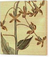 Botanical Print By Sydenham Teast Edwards 1768 – 1819 Wood Print