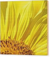 #923 D718 You Are My Sunshine. Sunflower On Colby Farm Wood Print