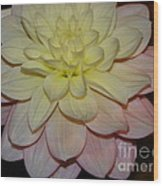 #928 D809 Dahlia Pink White Yellow Dahlia Thoughts Of You Wood Print