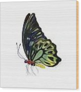97 Perched Kuranda Butterfly Wood Print by Amy Kirkpatrick