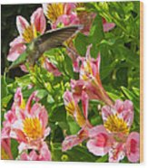 A Annas Humming Bird Wood Print
