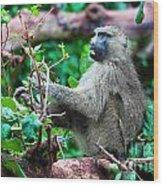 A Baboon In African Bush Wood Print