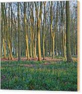 A Badbury Clump Evening Wood Print