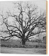 A Bare Oak Tree Wood Print