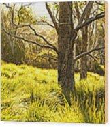 A Bare Tree Wood Print