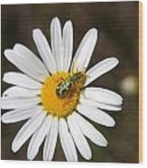 A Beattle On A Daisy Wood Print