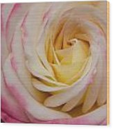 A Beautiful Pink Rose In Summertime Wood Print
